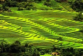 hagiang-bacha