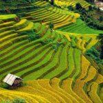immersion dans-la vie locale du nord vietnam 2