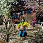 Aux confins du Tonkin Vietnam 3