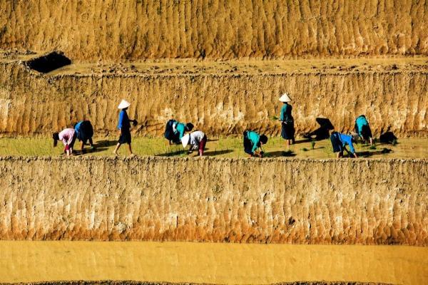 rizières en terrasse 1