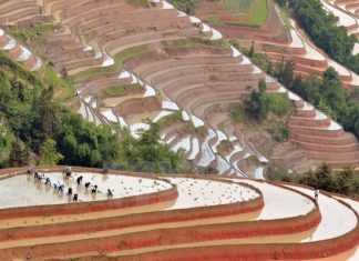 rizières en terrasse 3