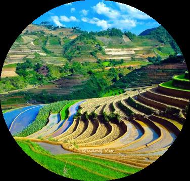 rizierre au vietnam