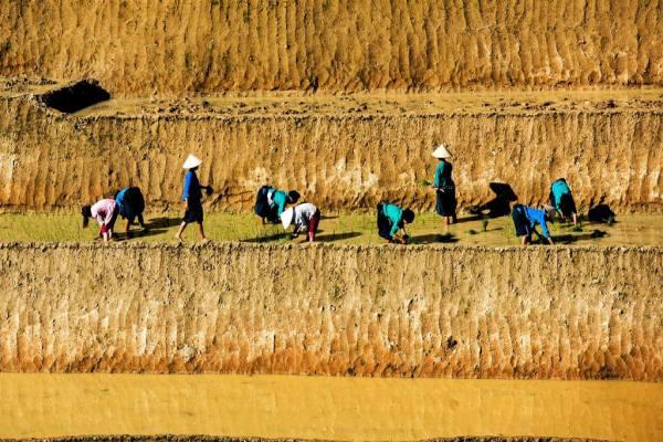 Quand voir les rizieres en terrasses au nord vietnam 1
