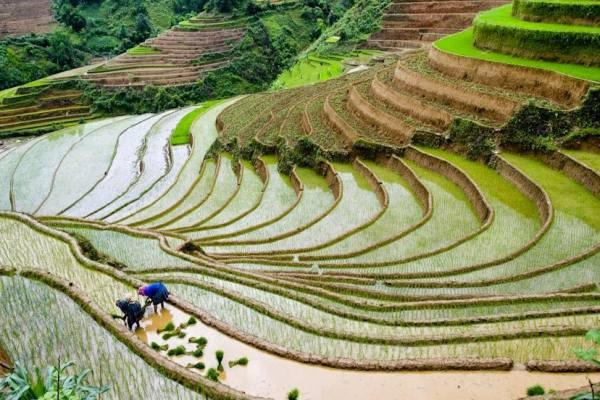 Quand voir les rizieres en terrasses au nord vietnam 2