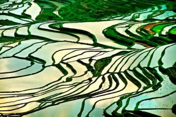 Quand voir les rizieres en terrasses au nord vietnam 3