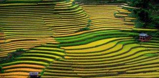 Quand voir les rizieres en terrasses au nord vietnam 4