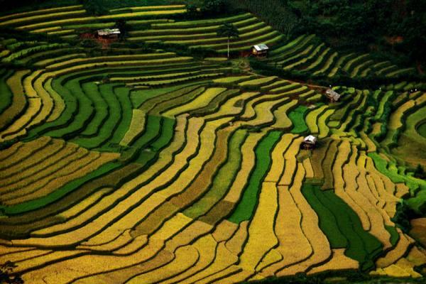 Quand voir les rizieres en terrasses au nord vietnam 5