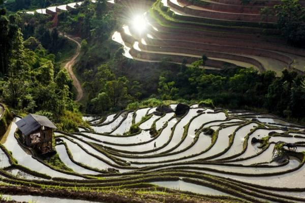 Quand voir les rizieres en terrasses au nord vietnam 7