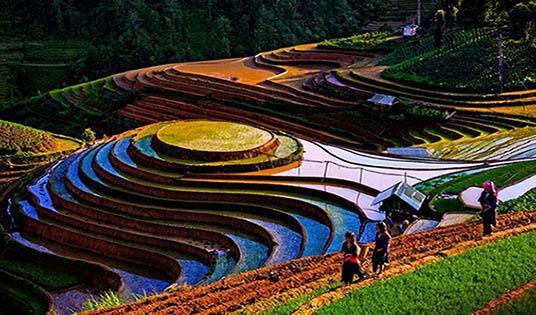 Rizières en terrasses Mu Cang Chai 2
