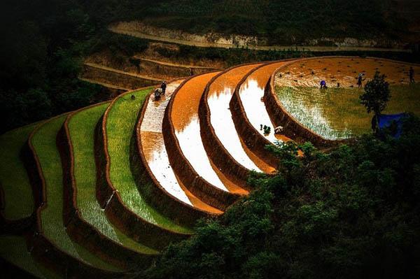 Rizières en terrasses Mu Cang Chai 5