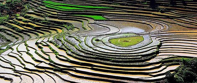 Rizières en terrasses Mu Cang Chai