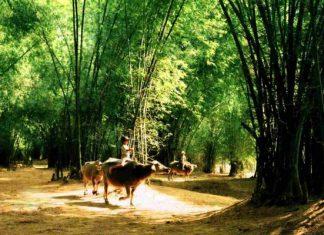 visiter la campagne de Hue à vélo 6