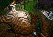 Rizières en terrasses Mu Cang Chai 3